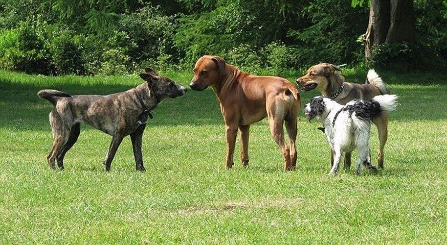 Funtime 4 dogs hondenuitlaatservice Haarlem