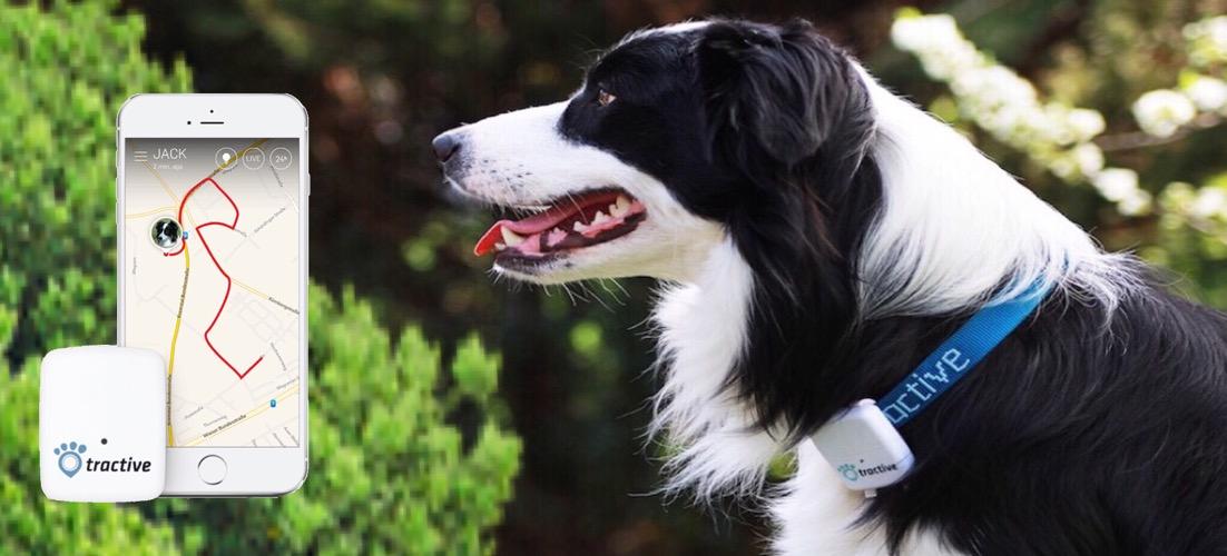 GPS bij Funtime4dogs hondenuitlaatservice in de regio Haarlem
