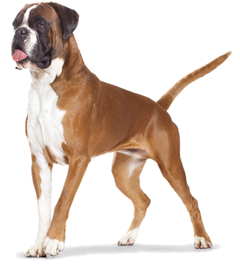 Nummers en contact hondenuitlaatservice Haarlem